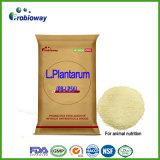 Питание добавок питания примикса Probiotics лактобациллы Plantarum животное