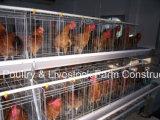 Equipo automático de la venta caliente en casa de las aves de corral con la construcción prefabricada de la casa para el pollo