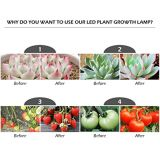 Il migliore LED si sviluppa chiaro per le piante