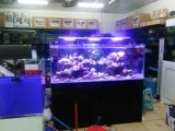 WiFi APP Control LED Aquarium Light voor Koraalrif