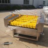 Machine commerciale de nettoyage de balai pour la patate douce de datte