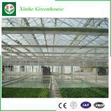 China Proveedor Multi agrícola de efecto invernadero de policarbonato Span