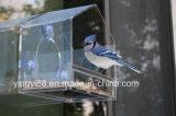 Grande Camera dell'uccello della finestra con la tazza di aspirazione di indennità
