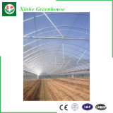 Serra agricola del film di materia plastica del traforo per le crescenti verdure