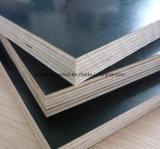 1220X2440mm stellte preiswerter die Pappel-Kern-Film Furnierholz nach Dubai gegenüber