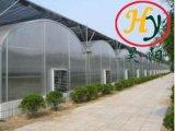 De Serre van de Fabrikant van China in de Prijs van de Fabriek en Goede Kwaliteit