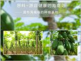 Polvere naturale dell'estratto della pianta di frutta della papaia per la confetteria