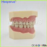 Programável dentária removível de Goma 28PCS Modelo dos dentes