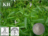 Andrographis Paniculata Extrait Andrographolide 5%, 30%, 50%, 95%, 98% par HPLC