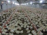 Système alimentant de poulet de carter automatique de câble d'alimentation