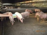 家畜および家禽育成のUnigrowの供給の添加物