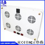 Alta Potência Chip CREE LED luzes crescer sabugo hidrop ico 900watt