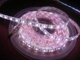 Striscia 5050 di IP68 LED