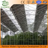 Invernadero fotovoltaico de bajo consumo de energía con bajo precio