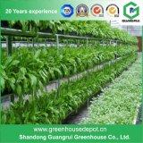 Anúncio publicitário da estufa da folha da estufa Film/PC do Hydroponics para a agricultura