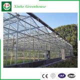 Casa verde da folha/plástico/a de vidro do policarbonato de China para vegetais
