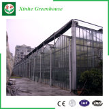 농업 다중 경간 야채를 위한 유리제 녹색 집