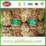 Haut de la qualité de gingembre frais chinois de 2017