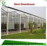 PC Fenster mit Glas für Garten-Gewächshaus-heißen Verkauf