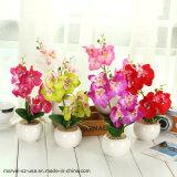 装飾によっては人工的なプラント蝶蘭のBonsaiのPhalaenopsisが開花する