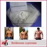 Polvere grezza androgena Cypionate stampato in neretto degli steroidi anabolici
