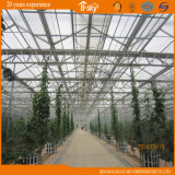 Venlo Glass Greenhouse pour Commercial Use