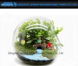 Envase de cristal del terrario del florero del plantador de la flor de la bola de la decoración del vector