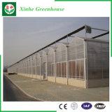 A China a Folha de policarbonato/plástico/Vidro Casa Verde para produtos hortícolas