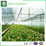 Sale를 위한 산업 Agriculture Film Greenhouse