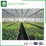 Landwirtschaft der grünen Glashäuser für Gemüse/Blumen