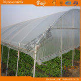 Planting Celery를 위한 높은 Output Arch Greenhouse