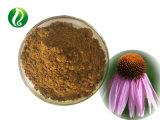 高品質のEchinaceaのPurpureaのエキスの粉のEchinaceaのCichoricの酸3%
