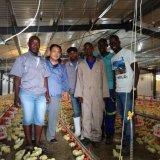 Casa pré-fabricados para frangos de corte com equipamento automático