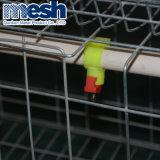 Mejor diseño duradero Tipo H automática de la capa de la batería de la jaula de pollo