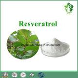 자연적인 거대한 Knotweed 추출 분말 Resveratrol 10%~98%