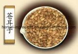 Extrait de fruit de Cocklebur sibérien, extrait de Xanthium Sibiricum, fructus Xanthii Xanthanol