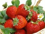 Poudre de jus de fraise pour boissons et saveur alimentaire