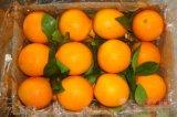 Frische Newhall Navel-Orange