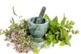 Os extractos vegetais