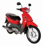Cub moto (ST110-7C)