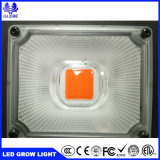 O espectro completo impermeável IP67 50W LED SABUGO crescer Light