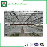 Chambre verte de feuille/plastique/en verre de polycarbonate de la Chine pour des légumes