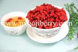 Collecte neuve Ningxia de haute qualité Zhongning Gojiberry à vendre