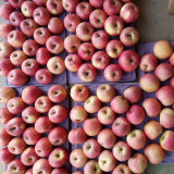 Hochwertig von frischem rotem Qinguan Apple