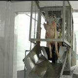 Maiale Stunning Machine per Slaughterhouse Equipment