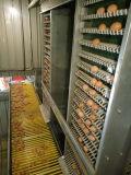 Bauernhof-Maschinerie-Batterie für Geflügelfarmen