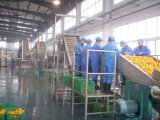 Grand constructeur de machine d'usine de jus de mangue en Chine