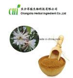 100% 자연적인 Epiphyllum Oxypetalum 추출 10:1, 음식 보충교재를 위한 20:1