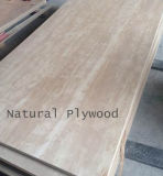Grão natural do Irregular do uso da mobília da madeira compensada do vidoeiro