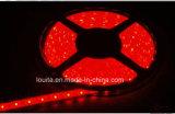 De calidad superior 2835 120leds / M LED Strip con patatas fritas Epistar